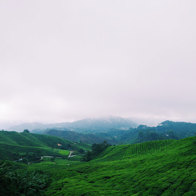 Tea plantations at Cameron Highlands Malaysia